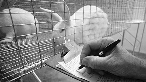 美生物医学研究使用动物数量创历史新低
