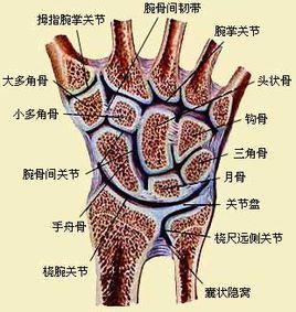 手腕骨折诊疗指南