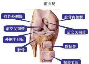 膝关节疼痛常见疾病病 骨关节病