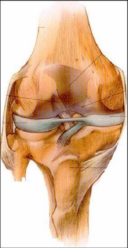 膝盖图片结构图